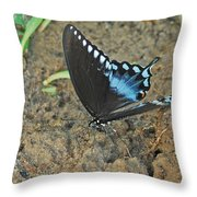 Eastern Tiger Swallowtail 8537 3215 Throw Pillow