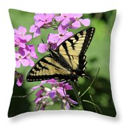 Canadian Tiger Swallowtail On Phlox Throw Pillow