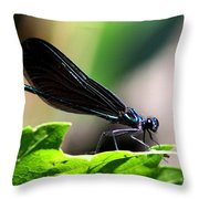 Ebony Jewelwing In The Spotlight Throw Pillow