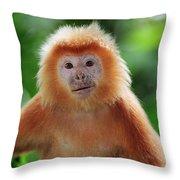 Ebony Leaf Monkey Trachypithecus Throw Pillow
