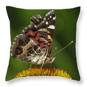 Echinacea Butterfly Meal Throw Pillow by Darleen Stry