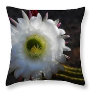 Echinopsis Candicans Throw Pillow