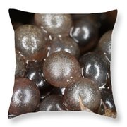 Eggs On A Crayfish Throw Pillow