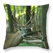Eight Point And Fawn_9532_4367 Throw Pillow