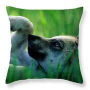 Eight-week-old Captive Gray Wolf, Canis Throw Pillow
