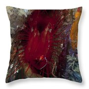 Electric Clam, Lembeh Strait, North Throw Pillow