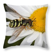 Elegant Hoverfly Throw Pillow