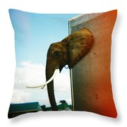 Elephant Box Throw Pillow