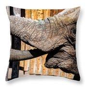 Elephant Feeding Time At The Zoo Throw Pillow
