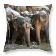 Elephant Herd In River Throw Pillow