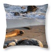 Elephant Seals At Piedras Blancas Throw Pillow