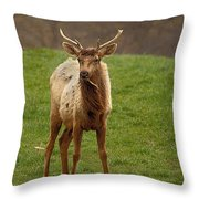 Elk 1 Throw Pillow