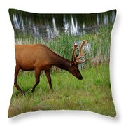 Elk Cervus Elaphus Jasper National Throw Pillow