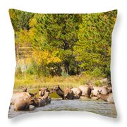 Elk Herd With Autumn Colors Throw Pillow
