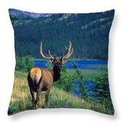 Elk In Summer By Mountain Lake Throw Pillow