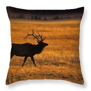 Elk In Yellowstone National Park Throw Pillow