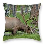 Elk Meadow  Throw Pillow
