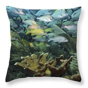 Elkhorn Coral With Schooling Grunts Throw Pillow