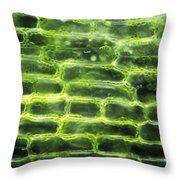 Elodea Leaf Throw Pillow