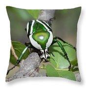 Emerald Fruit Chafer Beetle Throw Pillow
