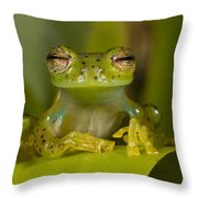 Emerald Glass Frog Centrolene Throw Pillow