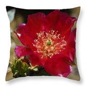 Englemann's Prickly Pear Cactus  Throw Pillow