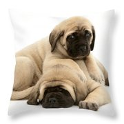 English Mastiff Puppies Throw Pillow