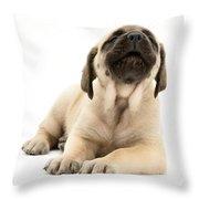 English Mastiff Puppy Throw Pillow by Jane Burton