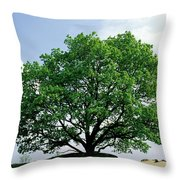 English Oak Quercus Robur In Spring Throw Pillow