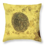 Entamoeba Histolytica Lm Throw Pillow by Eric V. Grave