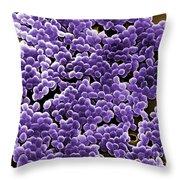 Enterococcus Sp. Bacteria, Sem Throw Pillow
