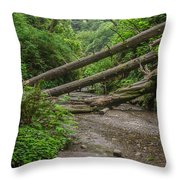 Entrance To Fern Canyon Throw Pillow