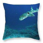 Epaulette Shark Hemiscyllium Ocellatum Throw Pillow
