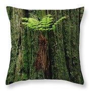 Epiphytic Fern Growing On Redwood Throw Pillow