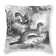 Ermines In Summer Throw Pillow
