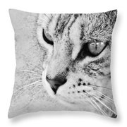 Eternal Stare Down Throw Pillow