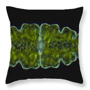 Euastrum Oblongum Algae Lm Throw Pillow