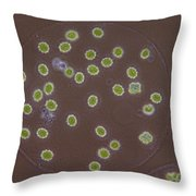 Eudorina Elegans, Green Algae, Lm Throw Pillow
