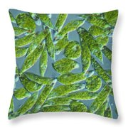 Euglena, Lm Throw Pillow