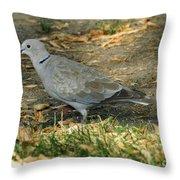 Eurasian Dove Throw Pillow