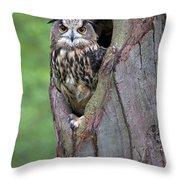 Eurasian Eagle-owl Bubo Bubo Looking Throw Pillow