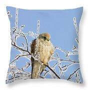 Eurasian Kestrel Falco Tinnunculus Throw Pillow