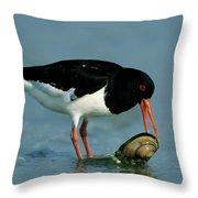Eurasian Oystercatcher Haematopus Throw Pillow