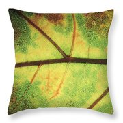 European Beech Fagus Sylvatica Detail Throw Pillow