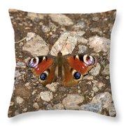 European Peacock Throw Pillow