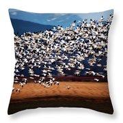 Evening Flight Throw Pillow