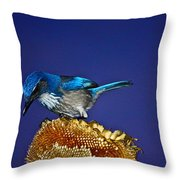 Evening Visitor Throw Pillow