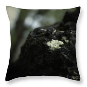 Evolution Of Thought Throw Pillow