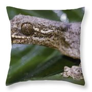 Extreme Close-up Of A Gecko In The Rain Throw Pillow