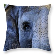 Eye Of The Elephant Throw Pillow